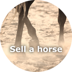 Sell your horse now