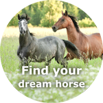 Find your dream horse now