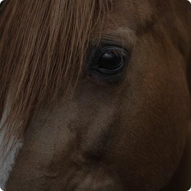 Buying and selling horses | horse market ehorses com