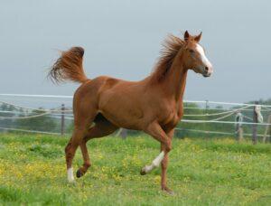 Horse trotting on field