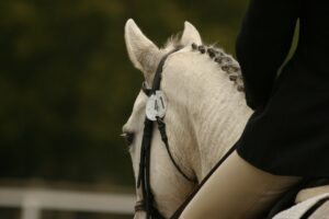 white horse with button plaits