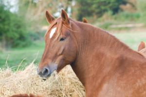 horse-stress